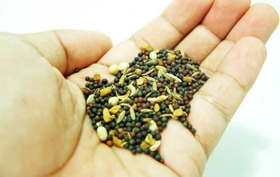 Incorpora semillas a tus comidas