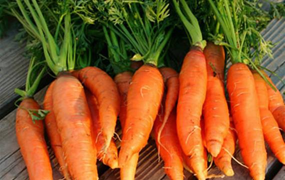 ¿Cómo conservar las zanahorias?