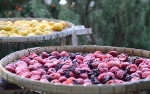Frutos secos: ¿Tienes exceso de fruta? ¡Hemos preparado instrucciones para usted sobre cómo procesarlo rápidamente y fácilmente!